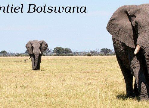logo essentiel botswana agence locale