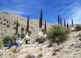 ©andar-peruano-photo3