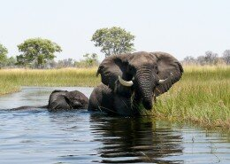 AFRICA-COEUR-SAFARIS-photo11
