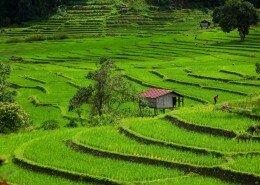 chiangmai-vacation-photo1