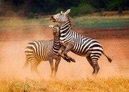 ©leboo-safaris-photo7