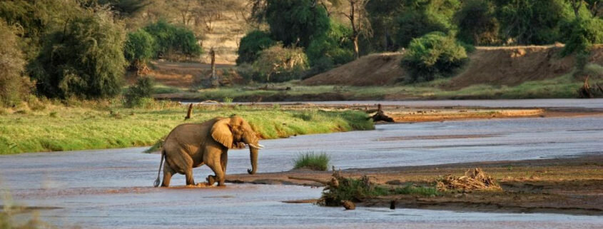 réservede samburu, Afrique
