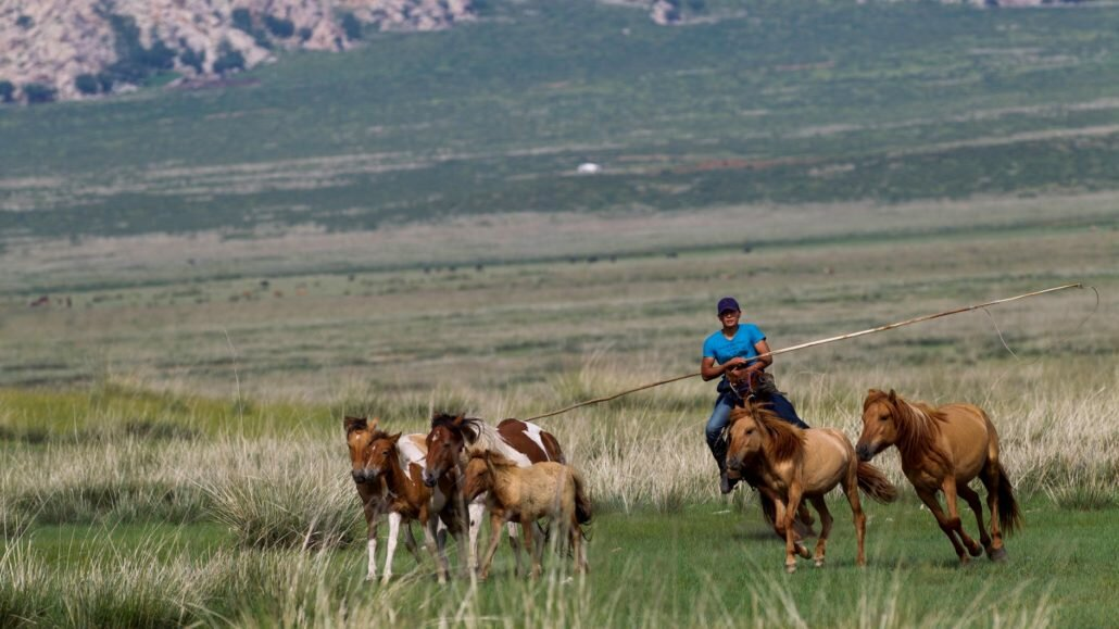 chevaux Mongolie