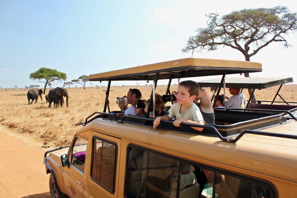 observation des éléphants dans le parc national de Tarangire