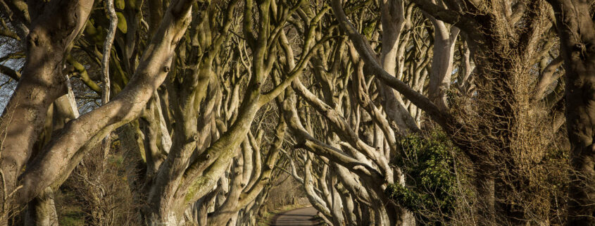 Game of Thrones ® - The Dark Hedges_The Kingsroad