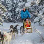 chien de traineau - Yukon